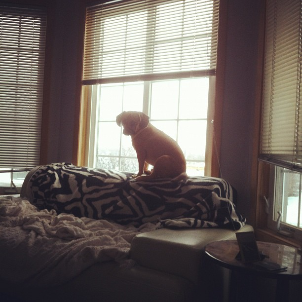 animal planet / he finds less interesting / then the passing cars #haiku