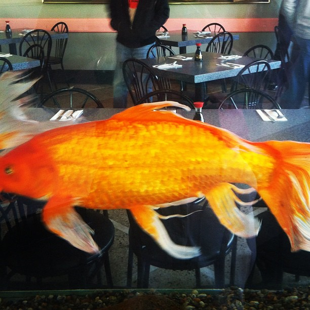 Ping's Chinese buffet / most memorable feature / this enormous fish