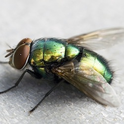 close up fly