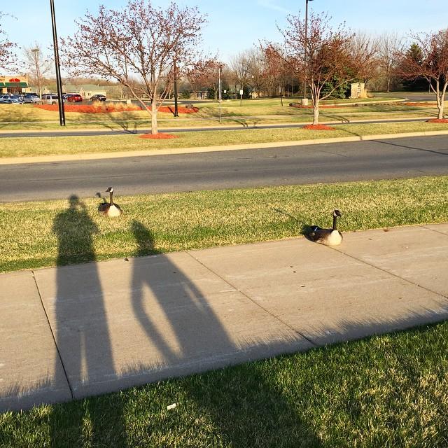 04-17-15-birds