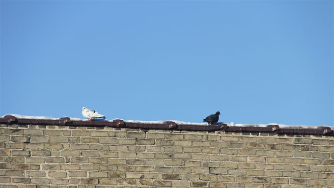 two birds on a rooftop wallpaper